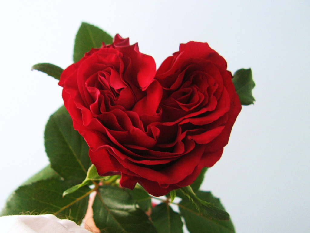 25 beautiful hearts and roses pictures colorlava - Pics of roses and hearts ...