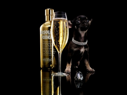 DRINK WITH DOGY