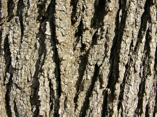 Awesome Tree Bark Texture