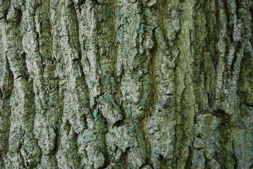 Beautiful Tree Bark Texture