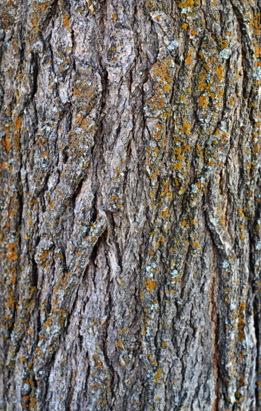 STOCK - Tree Bark 1
