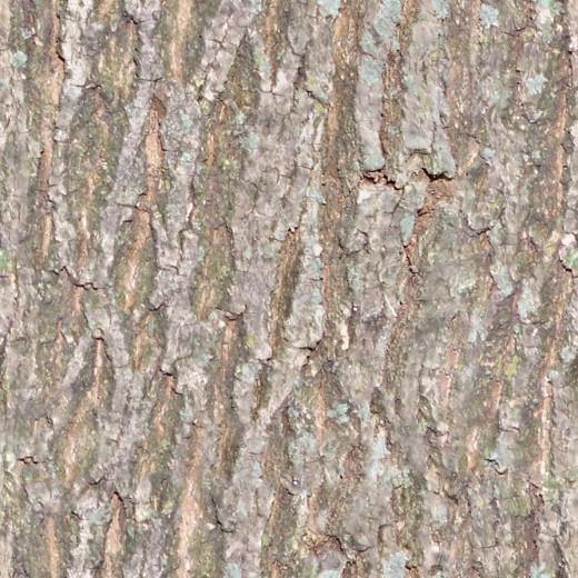Seamless Tiled Bark Texture