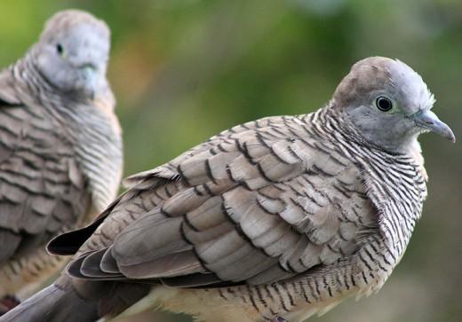 Doves by Ginaphotos