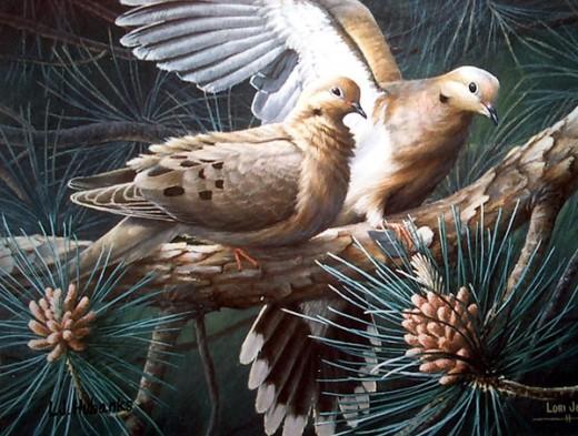 Morning Dove Pair