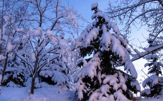 AN ALASKA CHRISTMAS