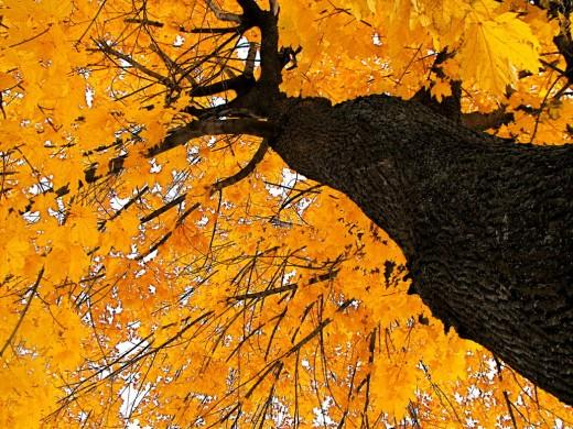Autumn by Dani the Naiad