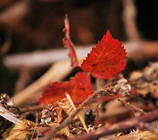 Autumn by Epicnom