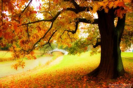 Autumn by Matthias Haltenhof