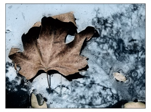 Autumn signs