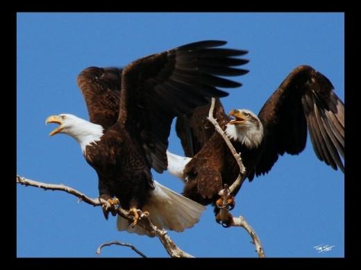 Double Eagle . WP