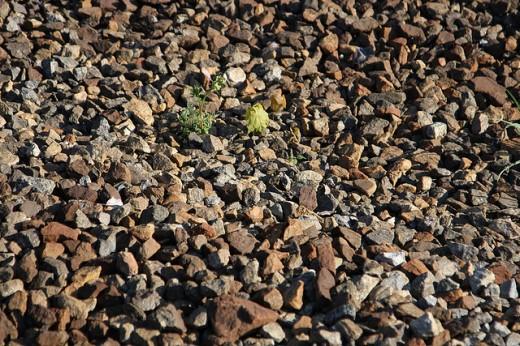Gravel Texture by CampanellaFoto