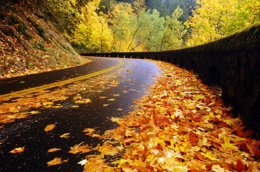 Historic Highway Autumn Study