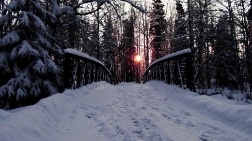WINTER SUNFIRE