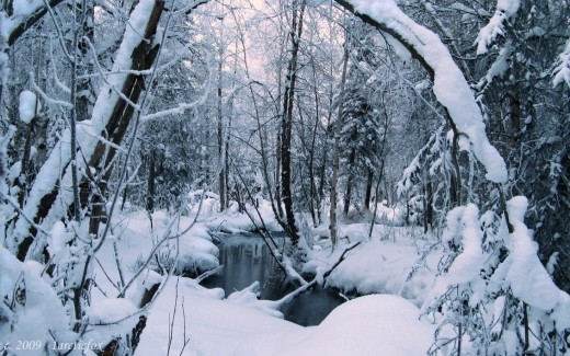 WINTER'S DEEP SECLUSION
