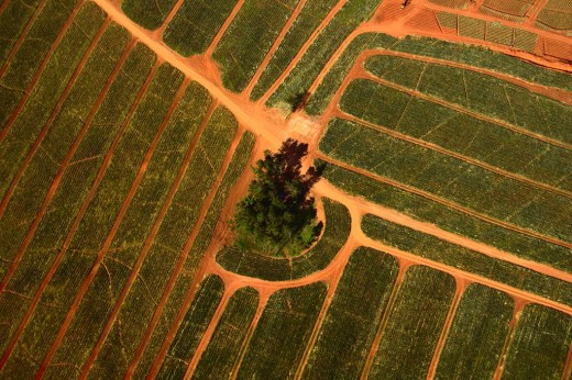 Aerial, solo tree in fields
