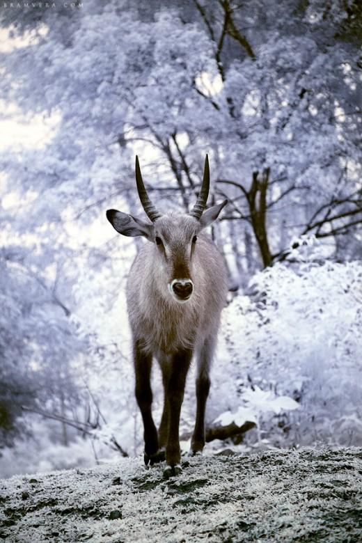 Animal Kingdom in Heaven 01