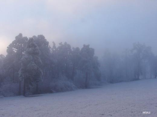 Blue Fog 1