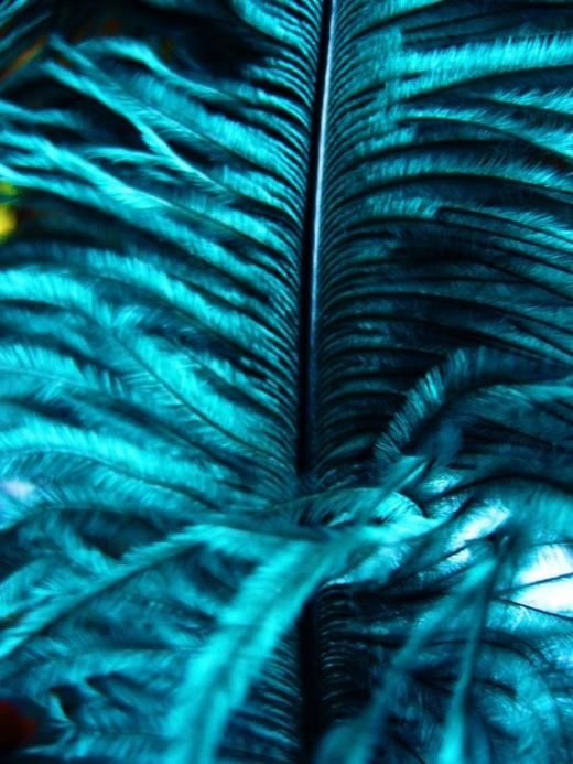 Feather Stem
