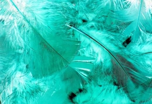 Feather Stock - Cyan