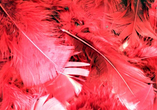 Feather Stock - Red