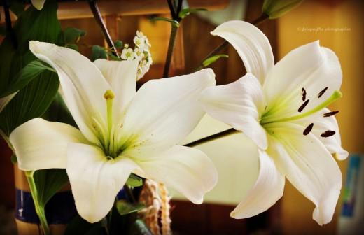Flower 223 by Fotografka