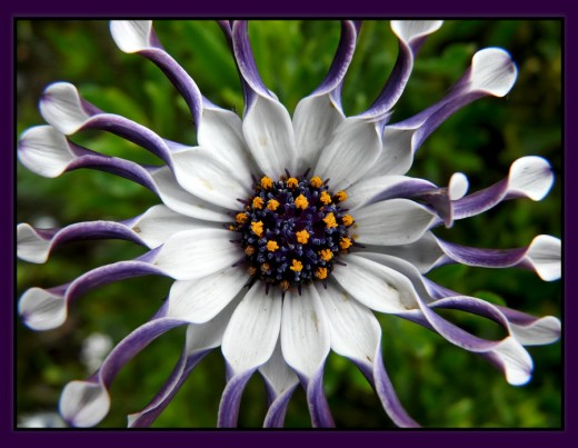 Fun Flower