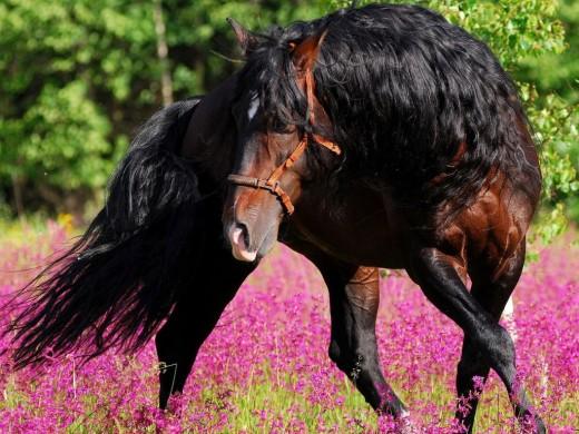 King Horses