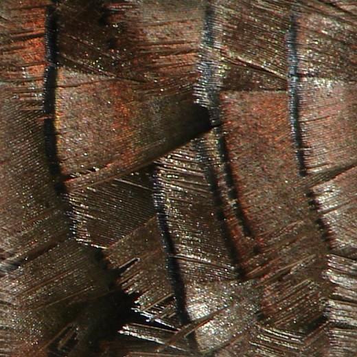 Turkey Feather Texture Tile 2
