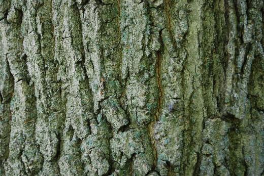 Beautiful Tree Bark Texture