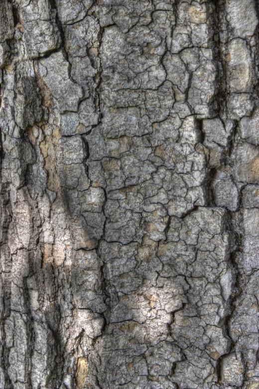 Free HDR Tree Bark Texture 3