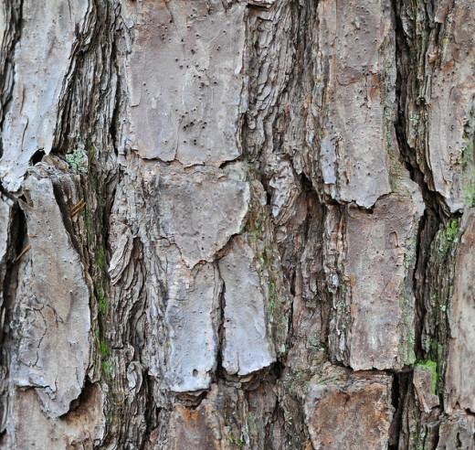 Free Tree Bark Texture