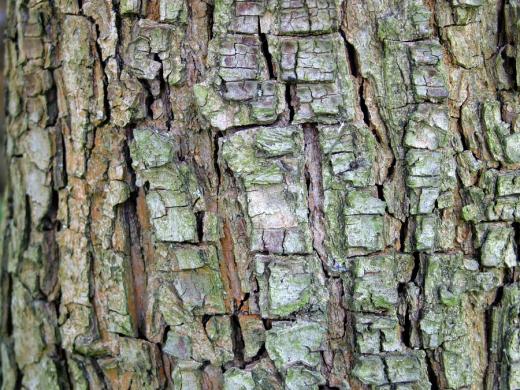 Peak Tree Bark Texture