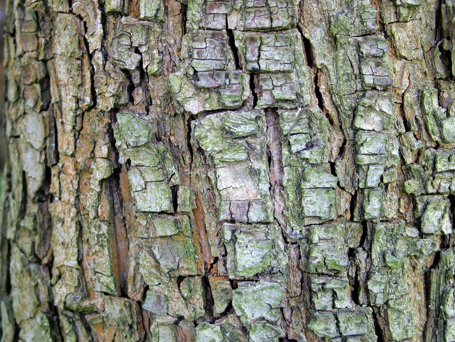 Peak Tree Bark Texture