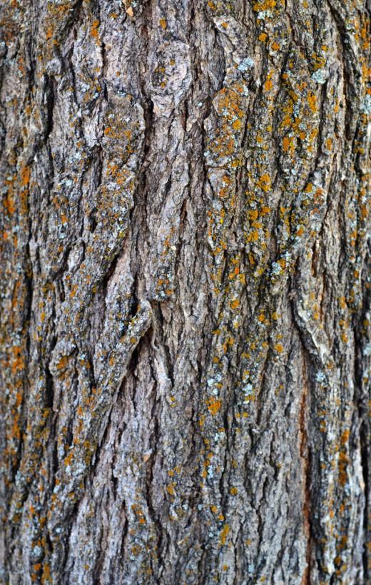STOCK - Tree Bark 1