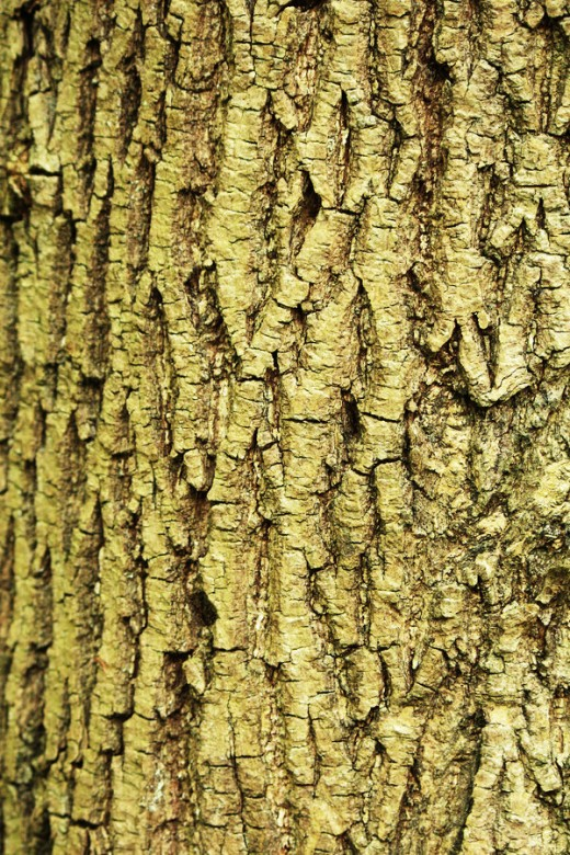 Texture Bark