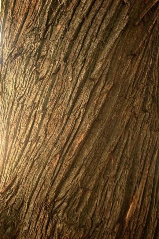 Texture3 - Chestnut Tree Bark