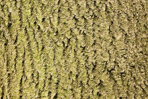 Free Tree Bark Texture Designs