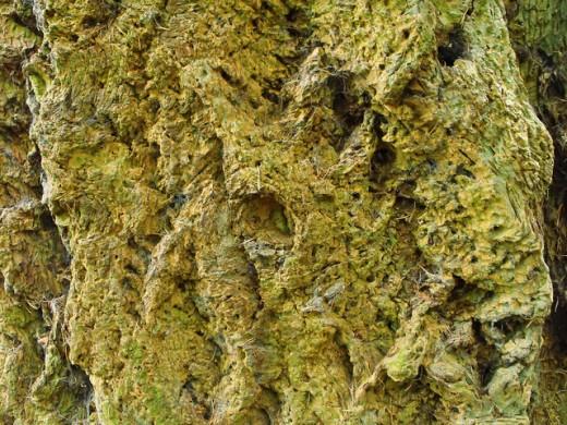 Tree Bark Free Texture