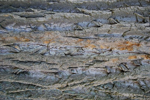 Tree Bark Texture 03