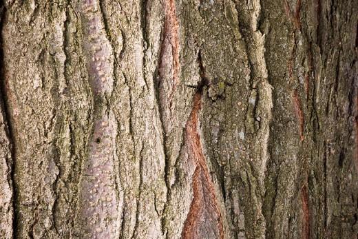 Tree Bark Texture Design
