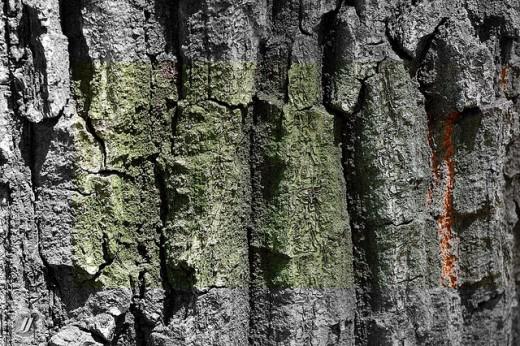 Tree, Texture 6