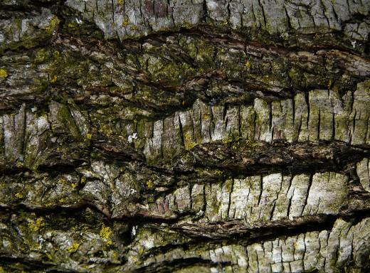 Wood Tree Bark Texture Stock